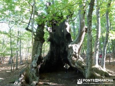 El Castañar de El Tiemblo , Un bosque mágico;grupos para hacer senderismo en madrid